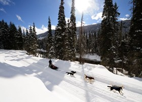Dog sledding offers an exhilarating adventure experience for all family members.