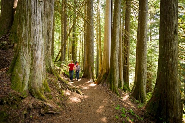 Whistler Ancient Cedars Hike